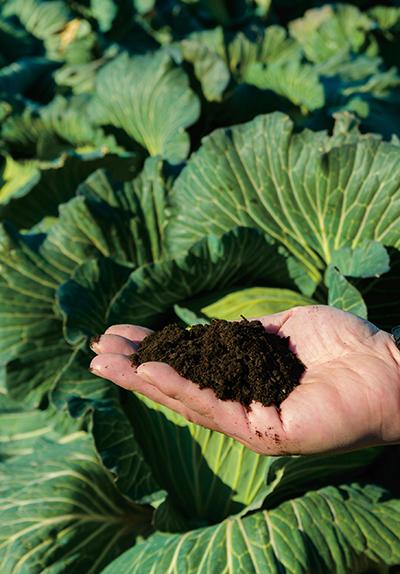 高品質有機肥料「豊根」1