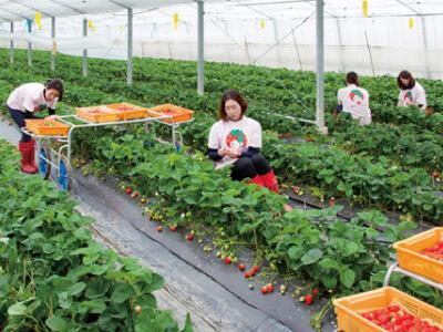 株式会社香月農園