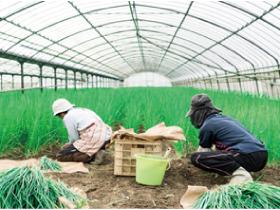 伊万里市農業協同組合